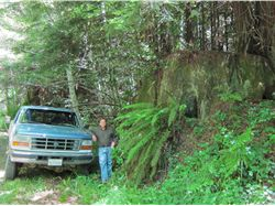 Art Harwood showing old-growth redwood stump