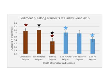 Average Sediment pH in Eelgrass Areas at Hadley Point
