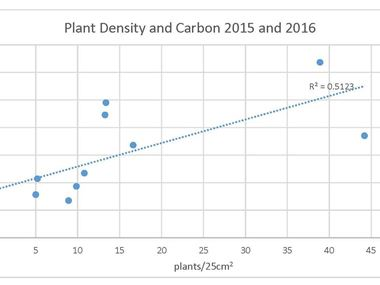 Correlation Between Eelgrass Density and Carbon